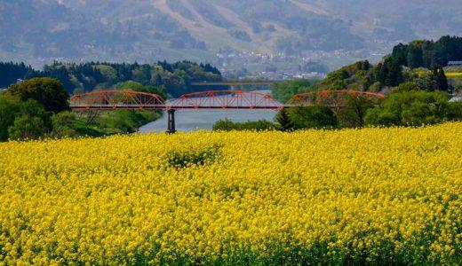 唱歌『朧月夜』に歌われた菜の花を愛でる!長野県飯山市の「菜の花まつり」