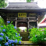 多彩な品種・1万本が咲き誇る北信州のあじさい寺!長野県飯山市「高源院」の紫陽花